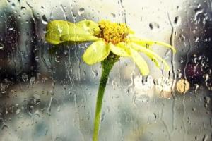 Yağmurun Sesini Hisset
