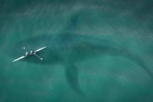 Dünyanın En Yalnız Balinası : 52 Hertz