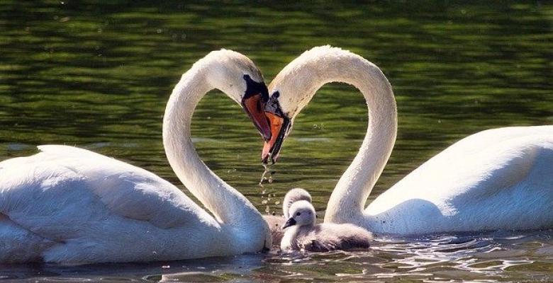 Sevmeye Dair