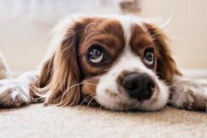 Bir Köpek Bir İnsana Neler Öğretebilir ?
