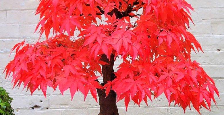Kırmızı Ağaç Tekniği
