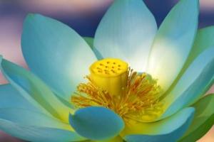 Çiçeklere günaydın desek
