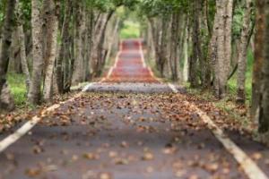 Hayat bir yoldur aslında