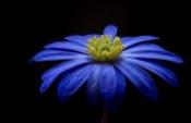 Mavi şiir
