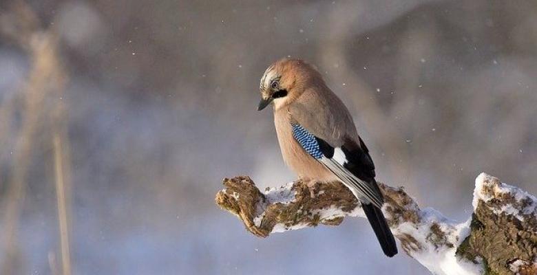 Kuşun Gözyaşları