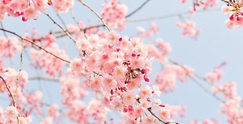 Bahar sevinci