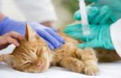 Kedi İç Parazit Doğal Tedavi Yöntemi