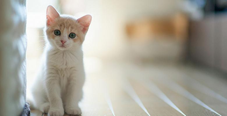 Kedimizin Güvenini Kazanma Yolları