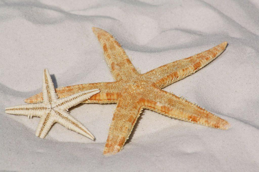 deniz-yildizi-karabatak