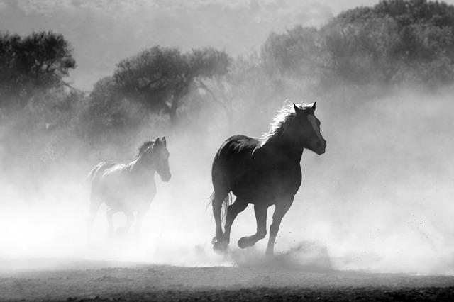 yaşamayı-bil-yarış-atı