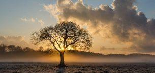Dilek Ağacım