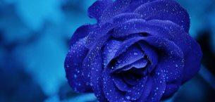Her şey mavi olacak